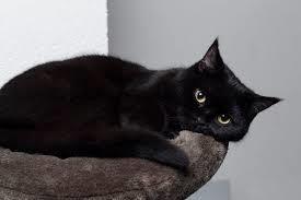 【悲報】 うちの子猫が元気ない……