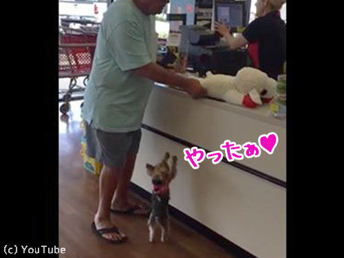 犬「よっしゃー、お気に入りのぬいぐるみを買ってもらった!」あれ…でも大きすぎない?」(動画)