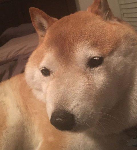 【画像あり】ガイジ犬を超越するガチガイジ犬があらわるwwwwwwwwwww