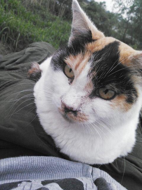 【画像あり】 野良猫膝の上にのってきた