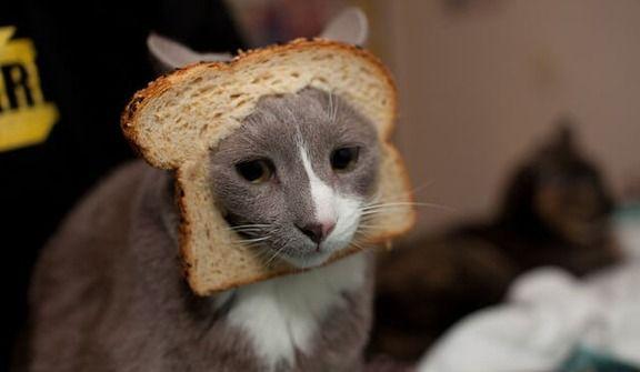 【画像集】 猫×食パンの画像がちょっと前に海外で大流行してたので、今更だけどまとめてみた