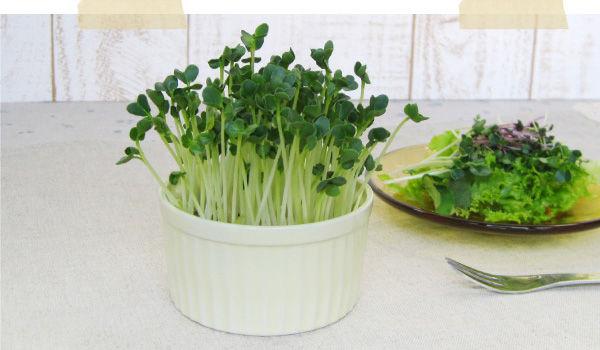 カイワレ大根とかいう無限に増え続ける野菜wwwww