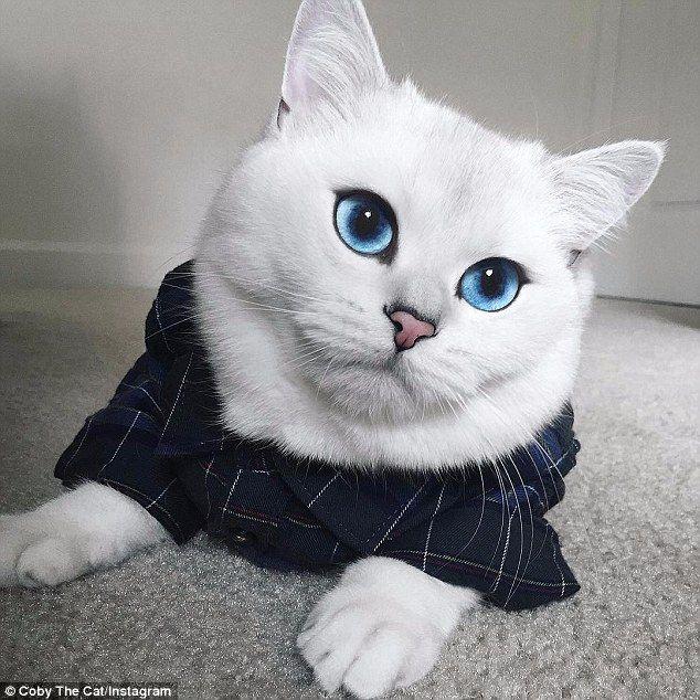 【画像あり】世界一美しいネコが発見される
