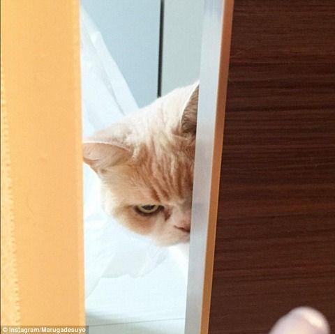 【画像あり】ダークサイドに堕ちたような目つきの猫が話題にwwwwwwwwwww