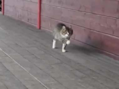 ネコは何かいいことあったのかな? ランランラン♪ → 軽快なステップで猫がやってきた…