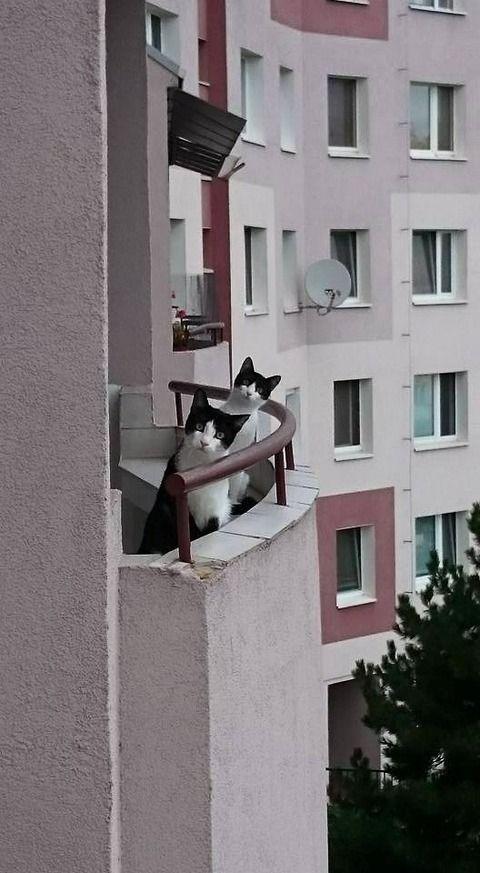 猫『おじちゃん仕事は?』