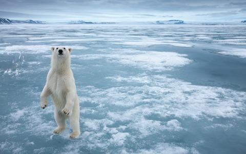 Polar-bear-in-the-cold-Arctic-ice_1920x1200