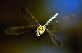 doragonfly1-2