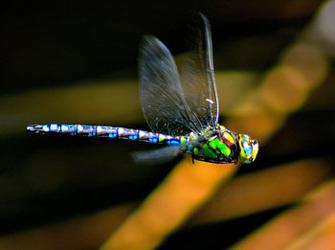 draronfly_2