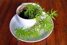 植物110519成長