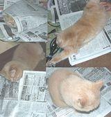 猫は人の読んでる新聞が好き