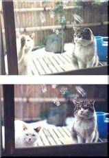 親戚宅の外猫