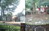 井の頭動物園…象のハナコさん60歳!&リス小屋は広々