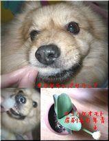 マユハケオモト(眉刷毛万年青)