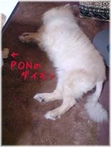 PON太とダイモン(アフラックダック)