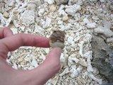 ヤドカリも沢山…砂が殆ど貝とサンゴの欠片