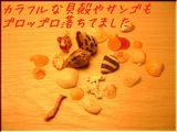 カラフルなサンゴ・貝殻がゴロッゴロしてました