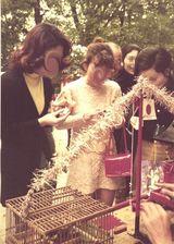 鳥おみくじ@京都・八坂神社1970s