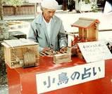 日本じゃ絶滅?コトリの占い
