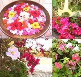 どこを見ても花と蝶々と鳥・・・
