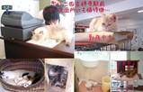 猫カフェ@吉祥寺「きゃらこ」…猫26匹&犬1匹待機中