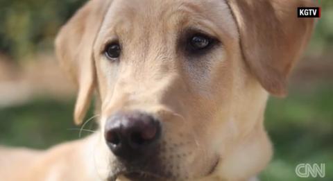 飼ってた犬をクローンで復活させるのがブーム 費用550万円