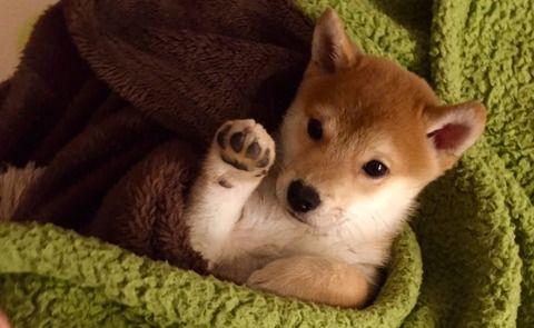 斬新過ぎるお手をする犬が話題にwwwwww
