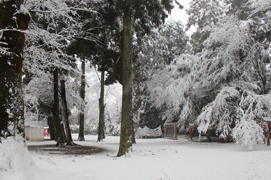 大雪の日の鷲宮神社境内裏手