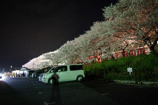 駐車場からの夜桜