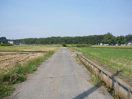 2010年9月11日の「こな田んぼ」