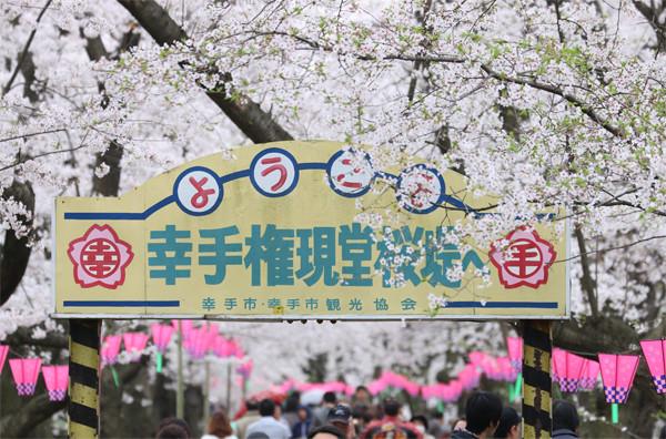 幸手権現堂 桜20150404-10