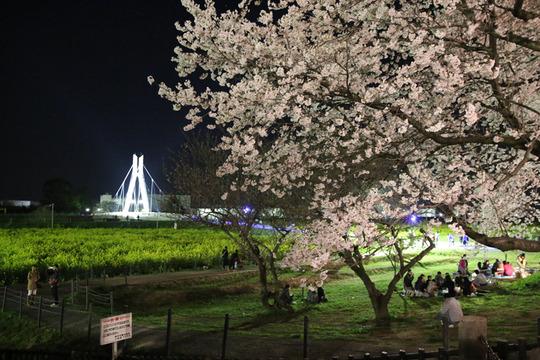 幸手権現堂の夜桜2014-01