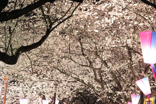 幸手権現堂の夜桜の屋根 3月28日