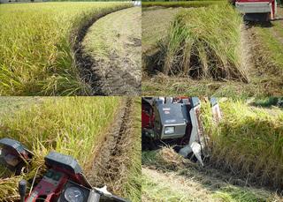 稲刈り2009