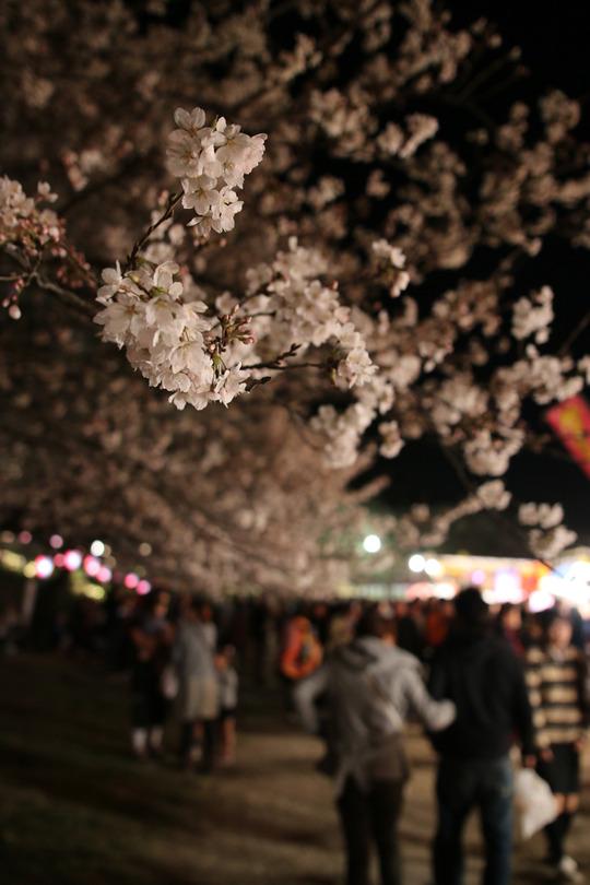 幸手権現堂の夜桜2014-06