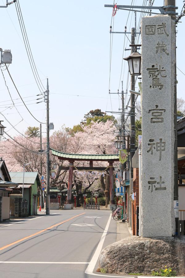 鷲宮神社の桜2015年 01