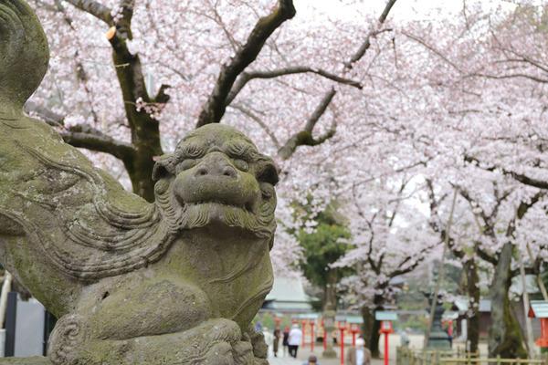 鷲宮の桜20160402-1