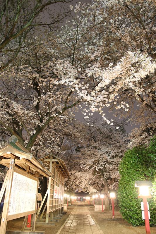 鷲宮神社境内の夜桜20140402