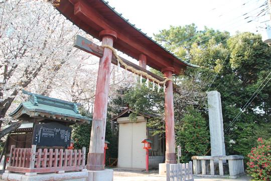 鷲宮神社鳥居と桜 2013年4月4日