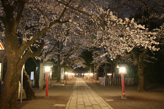鷲宮神社の夜桜20140331