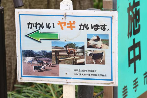 幸手権現堂 桜20150404-20