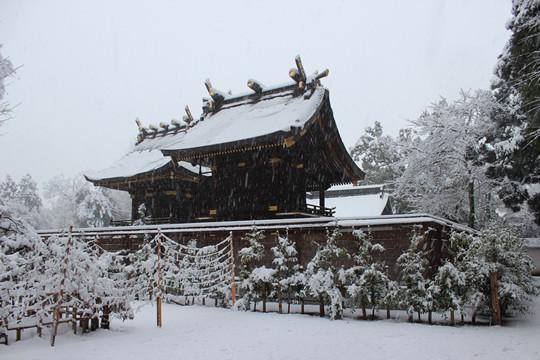 大雪の日の鷲宮神社本殿裏