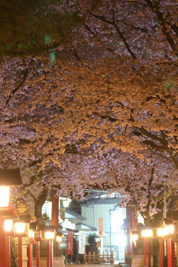 鷲宮の桜20160405-3