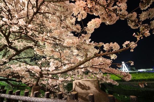 幸手権現堂の夜桜2014-03