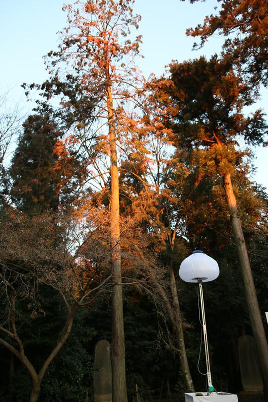 2014年元旦 初日の出の光に照らされる木