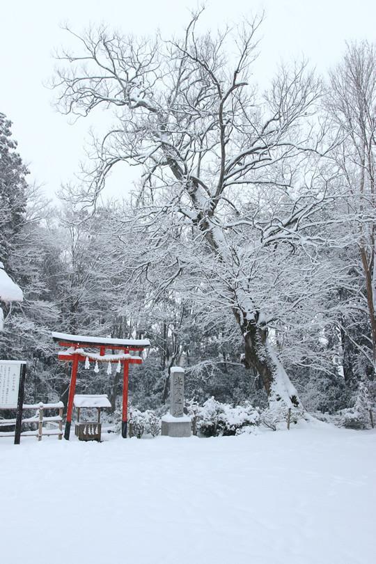 雪の鷲宮神社 光天之池