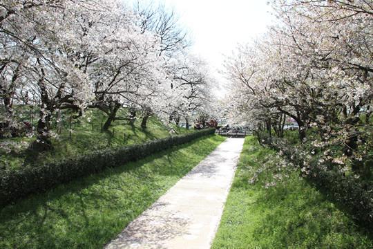 幸手権現堂の春の陽気 4月4日