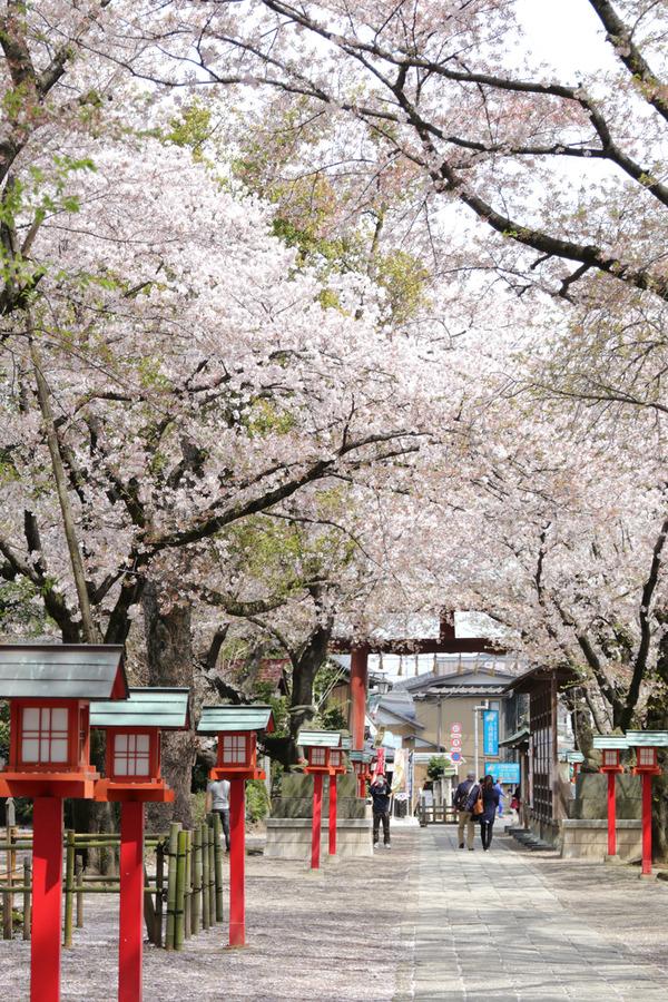 鷲宮の桜20160409-2