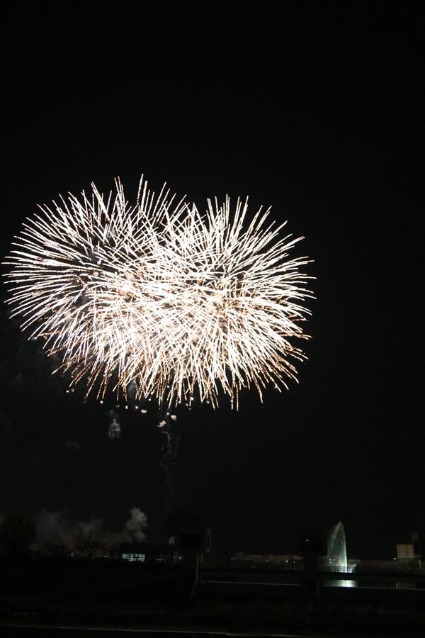 幸手権現堂 夜桜6