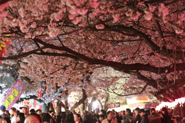 幸手権現堂 夜桜3